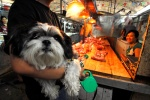 China, Beijing. Dog market, dog butchery, restaurant which serves specialities of dog meat.  © Maro Kouri