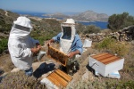 Greece, North Aegean, Fournoi. Local honey is famous worldwide for its supreme quality, taste and nutritiousness   © Maro Kouri